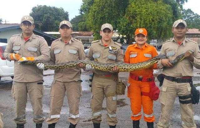 Animal é transportado pela área de pontes / Fotos: CBM/Divulgação
