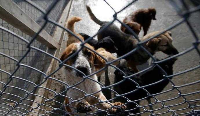 Detentos cuidam de cães abandonados em cadeia - Imagem: Divulgação