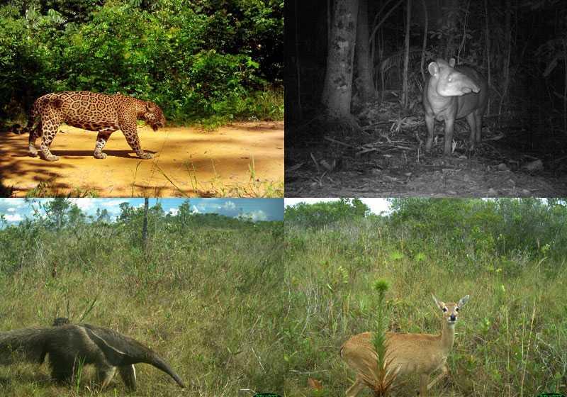 Parque Nacional dos Campos Amazônicos / Foto : Divulgação