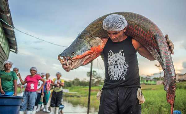 """Gestão Compartilhada dos Recursos Pesqueiros com foco no Manejo de Pirarucu""""/Foto: Aline Fidelix"""