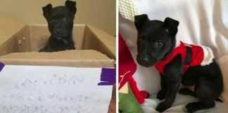 Menino é forçado a abandonar a sua cadela na porta da escola, com um bilhete triste. Muito triste / Foto : Divulgação