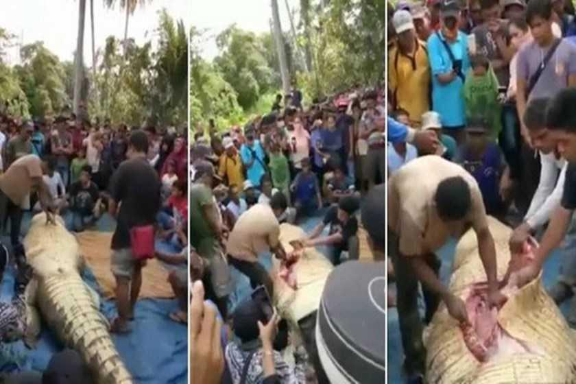 """Vídeo: Populares abrem barriga de jacaré e """"solucionam"""" um crime - Imagem: Divulgação"""