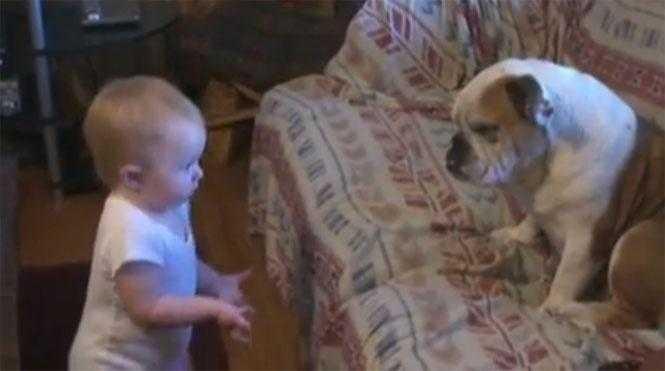 Bebê solta o verbo pra cima do seu buldogue e vídeo bomba na internet