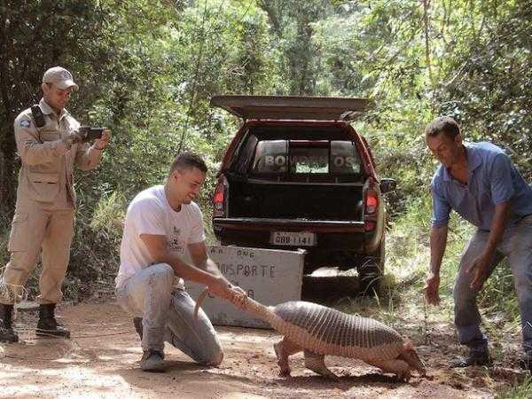 Ambientalistas resgatam tatu-canastra em avenida / Foto : Divulgação