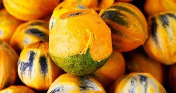 Benefícios para a saúde do Tucumã / Foto : Divulgação