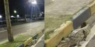 Jacaré se arreta e sai para dar um passeio de madrugada na Avenida Djalma Batista em Manaus