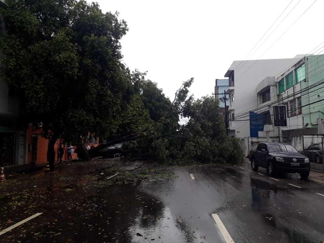 Novo vídeo mostra momentos após queda de árvore sobre carros em Manaus - Imagem: Reprodução