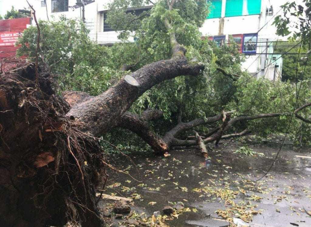 Árvore desaba em cima de carros no Centro de Manaus - Imagem: Reprodução