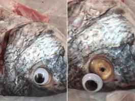 Peixaria colocava olhos de plástico nos peixes para parecerem frescos