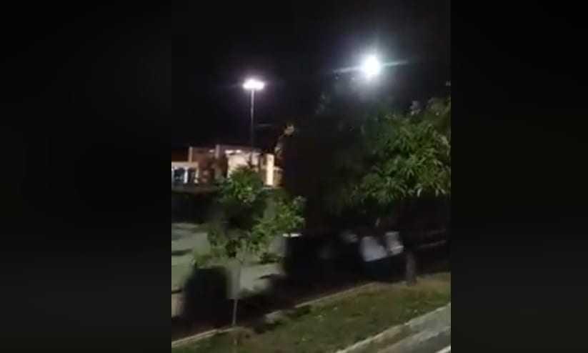 Flagrante de carreta atropelando dezenas de periquitos em avenida de Manaus - Imagem: Reprodução