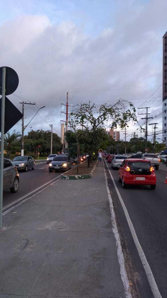 Estima-se que 12 mil aves pousam pelo canteiro central da avenida. / Foto: Divulgação