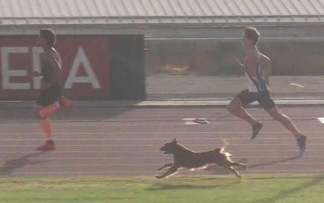 Cachorro endiabrado invade pista de corrida, ultrapassa os atletas e ganha competição