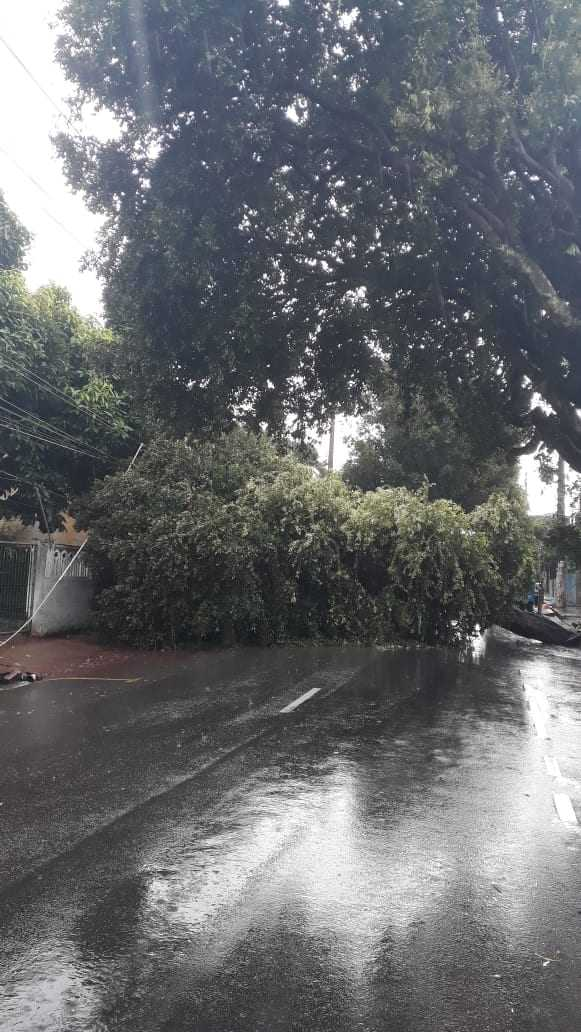 Agentes do manaustrans no local onde a árvore caiu no bairro Aparecida, orientando o trânsito na via. SEMULSP já foi acionada. / Foto: Divulgação