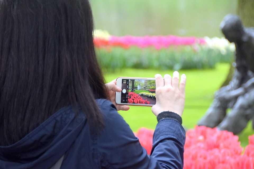 Holanda cria regras para proteger suas tulipas das selfies dos turistas  / Foto : Pixbay