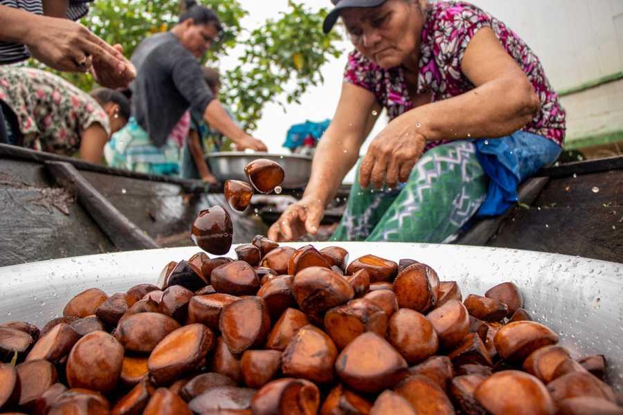 Óleo de andiroba tem alta demanda no mercado / Foto Bernardo Oliveira