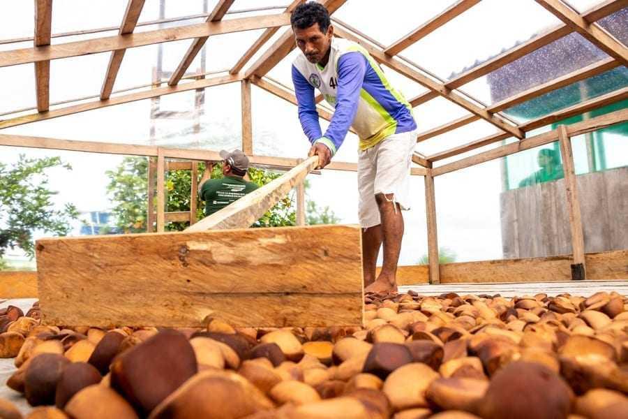 Projeto é realizado pelo Programa de Manejo Florestal do Instituto Mamirauá / Foto Bernardo Oliveira