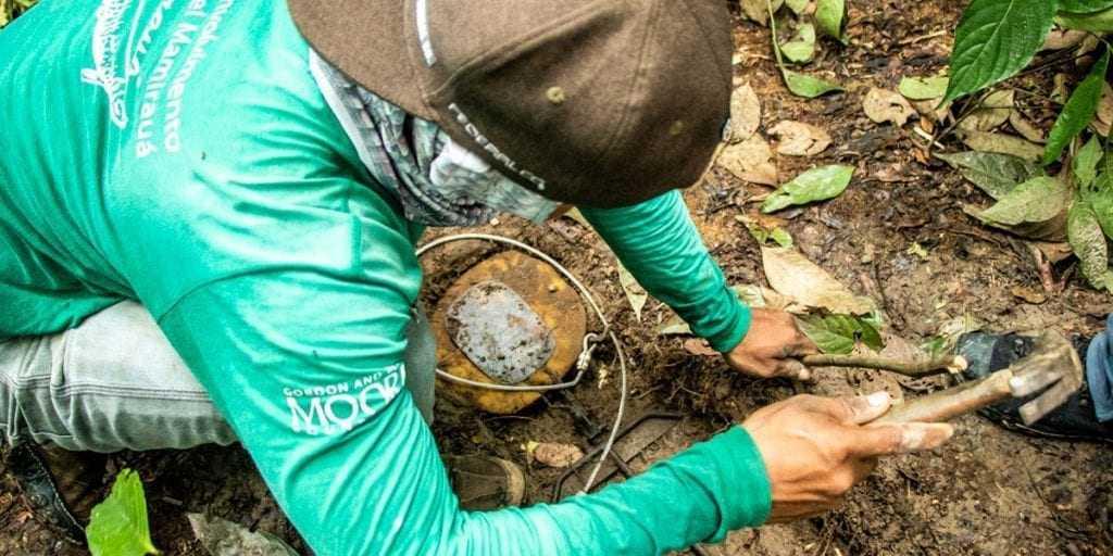 Pesquisa científica é aliada de ações de conservação da biodiversidade (Foto: Bernardo Oliveira)
