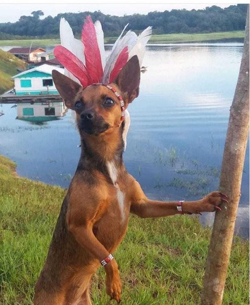 Cachorrinha Blogueirinha amazonense, Sarita / Reprodução Instagram