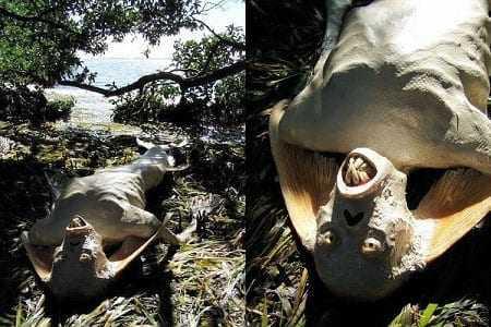 Magyr 2006 - Esta é a sereia de Manaus e de muitos outros lugares :)