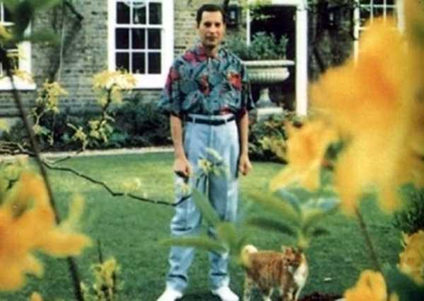 Freddie Mercury / Imagem: Reprodução/Hooch