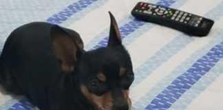 Família vai pagar R$30.000 para quem encontrar esse cachorro / Foto : Acervo Pessoal da Família
