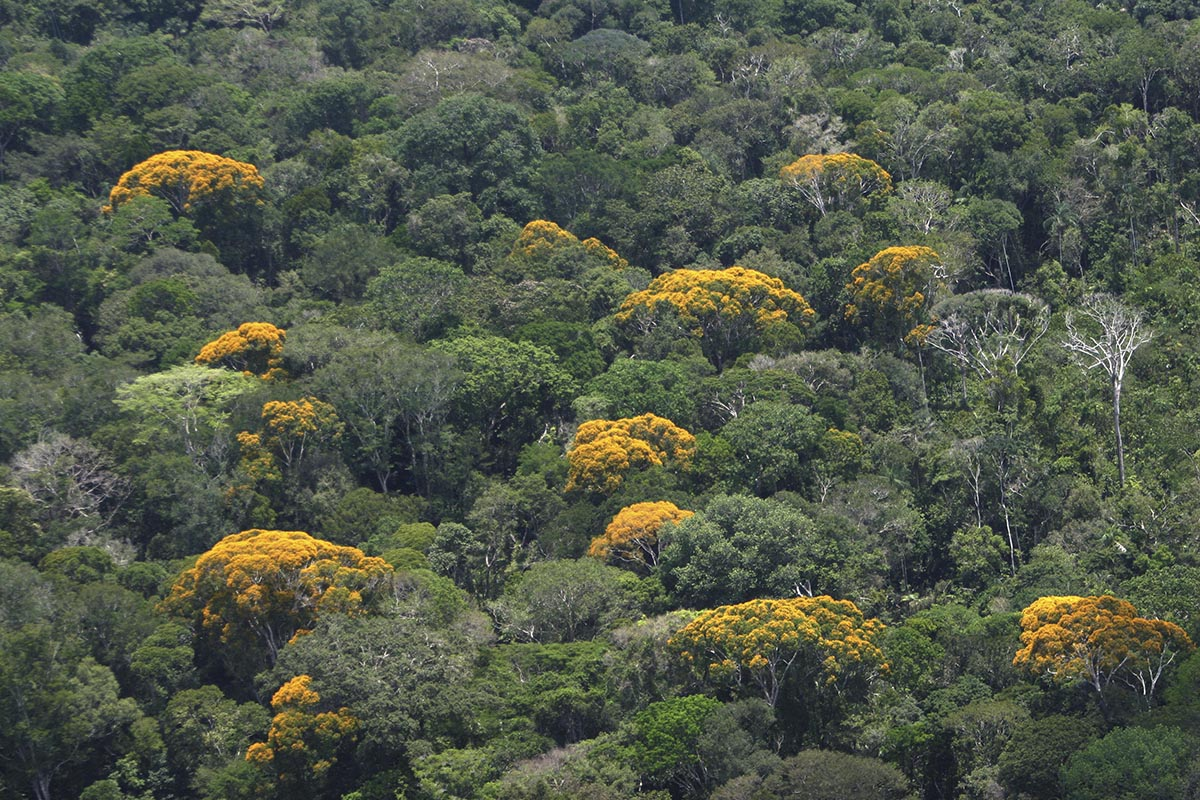 Floresta Preservada : foto : Ricardo Oliveira / SEMA