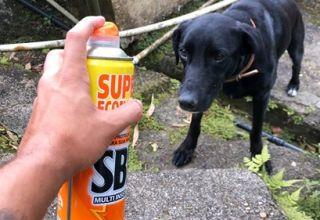 Vídeo mostra jovem espirrando spb em cachorro de rua