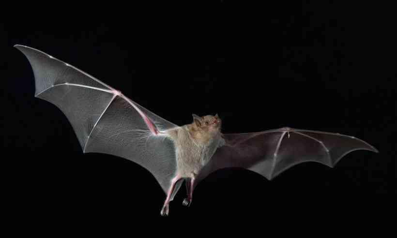 Cientistas apontam 6 novos tipos de coronavírus nos morcegos da China