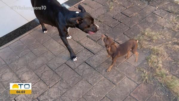 Pitbull perdeu os filhotes que estava esperando — Foto: Reprodução