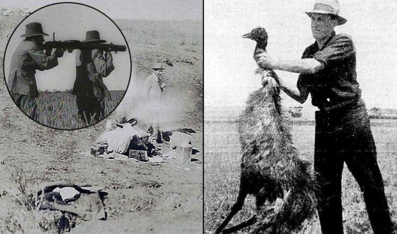 A Bizarra Guerra dos Emus - Austrália - 1832